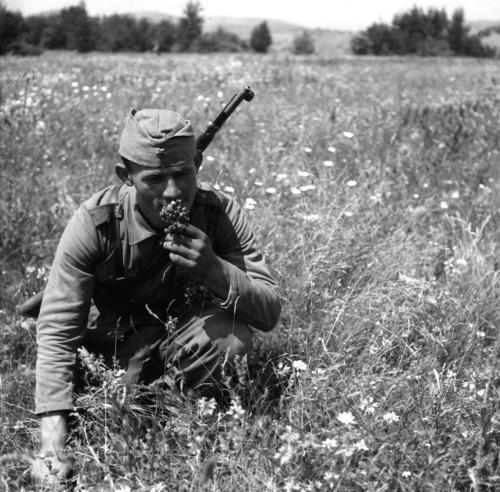 Yugoslav Partisan on the outskirts of Belgrade, 1945.